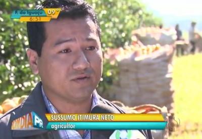 Produtores do Paraná querem aumentar exportações de laranja
