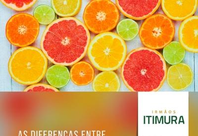 Quais são as diferenças entre os tipos de laranja?
